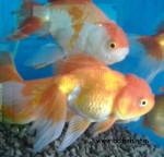 World Fish and Aquarium