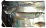 Dreamland Aquarium