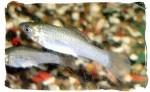 Fish Park Aquarium Center