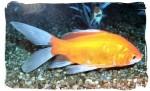 Shathi Aquarium